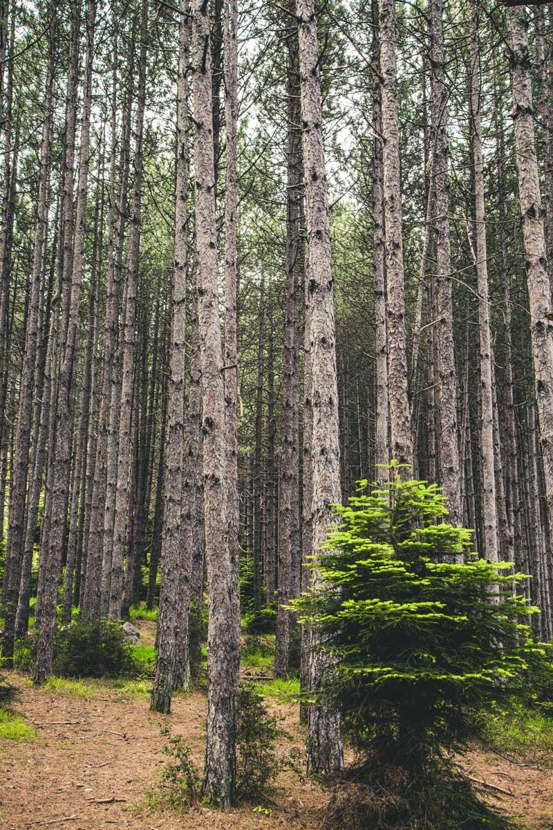 Το Σχολείο του Δάσους και η εκπαίδευση του Μικρού Δέντρου
