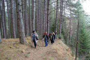 """Πορεία στο Δάσος """"Μαρκόπουλο"""""""